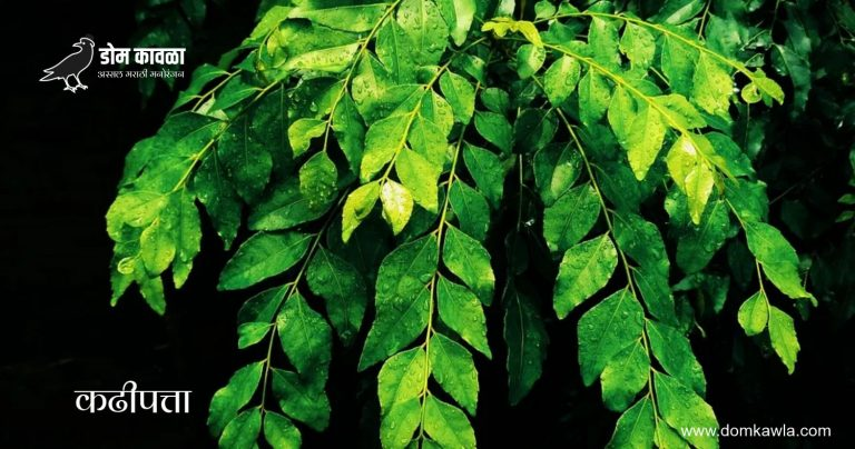 Benefit of Curry leaves