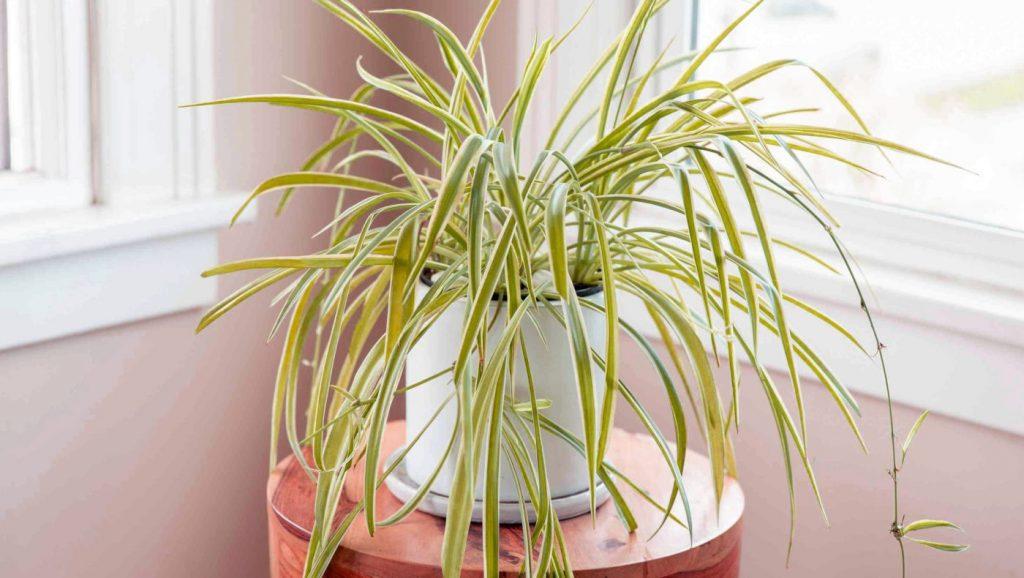 Indoor Plants Grow in Water