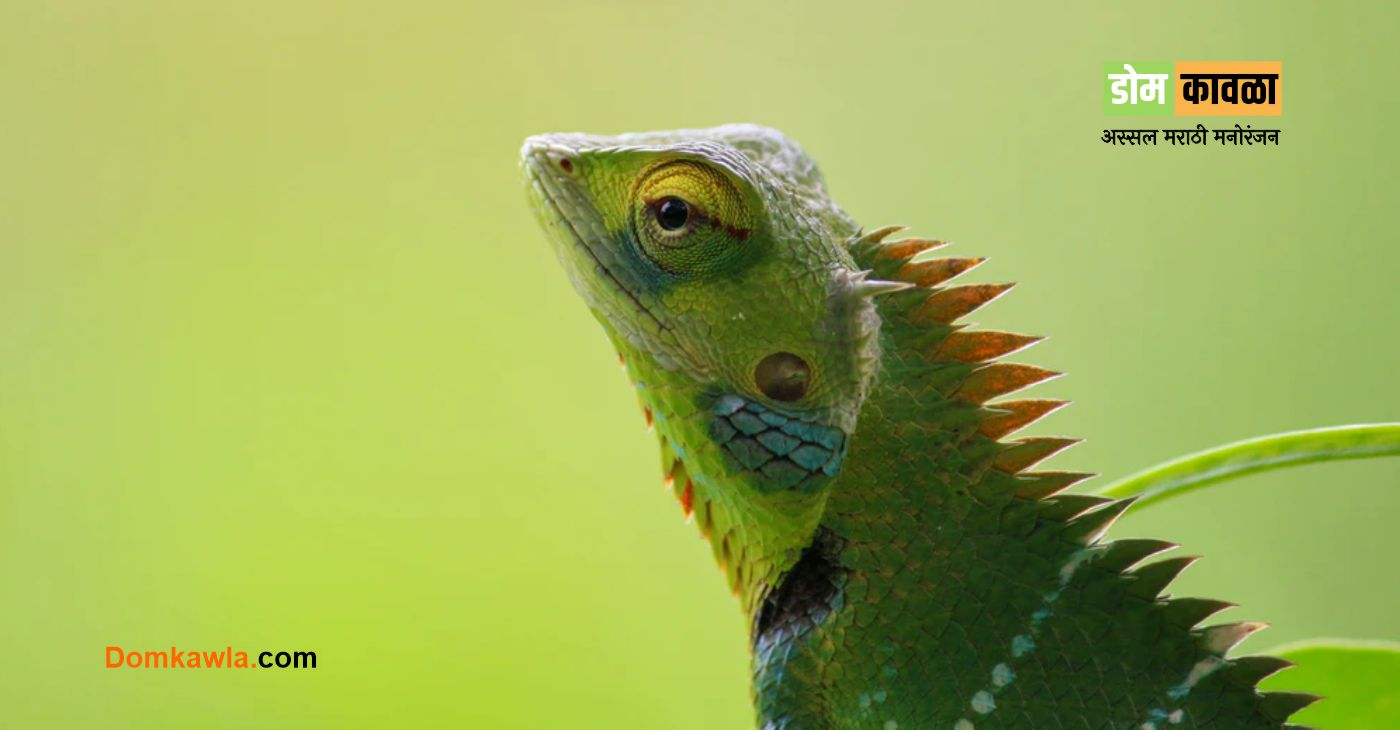Why do Chameleons Change Color