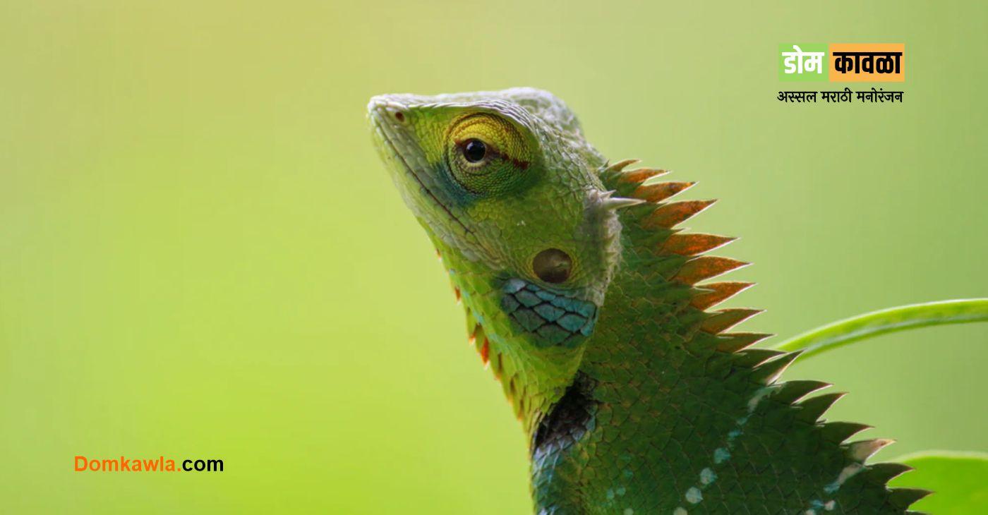 Why do Chameleons Change Color सरडा रंग का बदलतो?