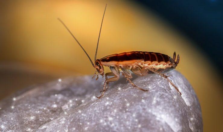 Cockroach Soup चीनी लोक का पितात या मागचे खरे कारण